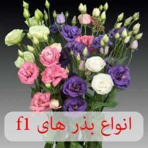 فروشگاه ظرافت ارائه کننده انواع بذر گل های f1